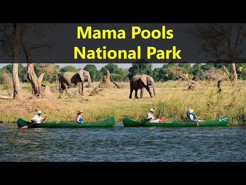 Best Tourist Attractions Places To Travel In Zimbabwe | Mana Pools National Park Destination Spot