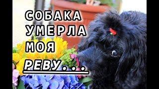 Умерла моя любимая Джойка. ❤️ Как пережить смерть собаки? | Family VLOGs Германия