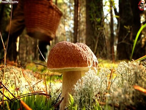 Вопрос: Сколько времени растут грибы?