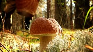 Где и как искать грибы, советы профессионального миколога, www.grib.tv