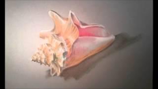 Fiona Poynter Art - Pastel Shells by Fiona Poynter Art