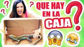 QUE HAY EN LA CAJA?! EXTREMO! Reto SandraCiresArt Challenge