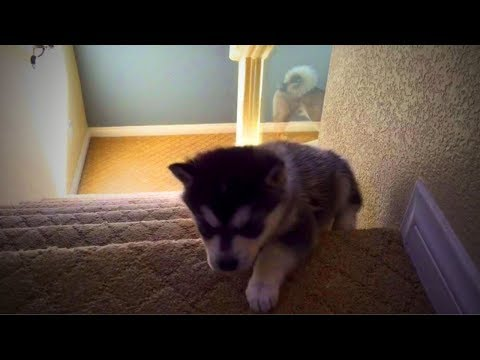 Weird Dogs 😂🐕 Funny Huskies 2017 - 2018 (Part 2) [Funny Pets]