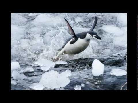 Antarctic Trip - December 2012