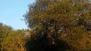 lever du jour au bois du barde