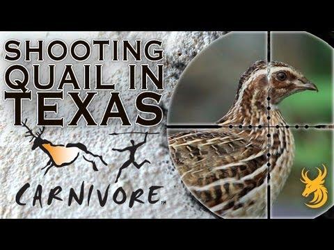 Shooting Quail In Texas