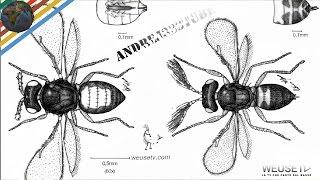 Malattie agrumi - Minatrice serpentina (Phyllocnistis citrella) Marco Beconcini trattamento agrumi