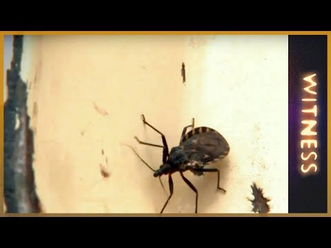 Chagas: A silent killer - Witness