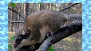 Животные  обитатели леса
