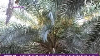 محمد الامين حروف إسمك