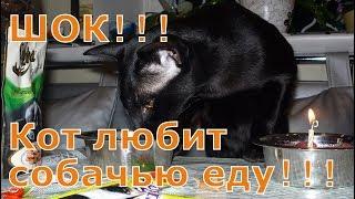 Челлендж для кота. ШОК!!! Кот выбрал собачью еду!!! SHOCK!!! The cat chose dog food !!!