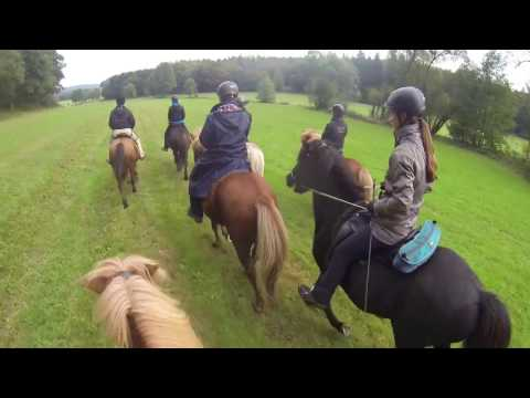 Group horse session