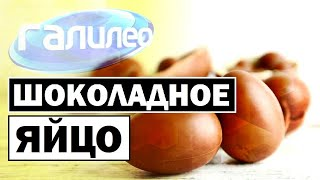 Галилео | Шоколадное яйцо  [Chocolate egg]