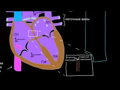 Овальное окно и артериальный проток