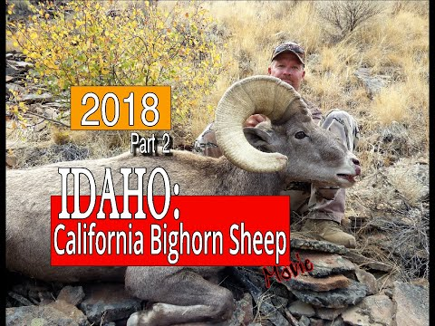 IDAHO: CALIFORNIA BIGHORN SHEEP HUNT- 2018