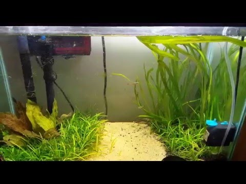 How To Lower Nitrates In Your Aquarium