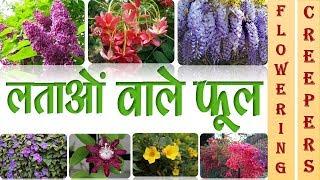 लताओं वाले फूल || FLOWERING CREEPERS