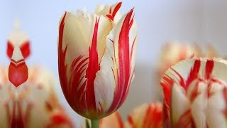 Beautiful Flowers - Best Flowers Video You Must Enjoy.
