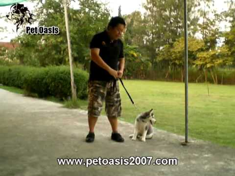 PetOasis : Puppy Kindergarten