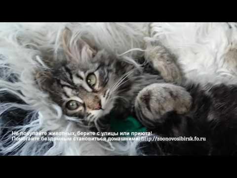 Вопрос: Как отлучить котят от кошки для передачи новым хозяевам?