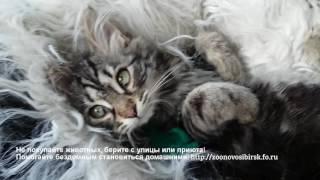 Встреча котенка из приюта с новой хозяйкой Новосибирск приют для бездомных животных