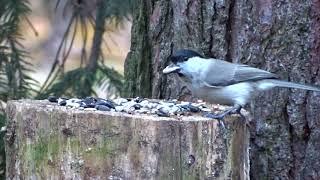 Dzikie ptaki w powiększeniach