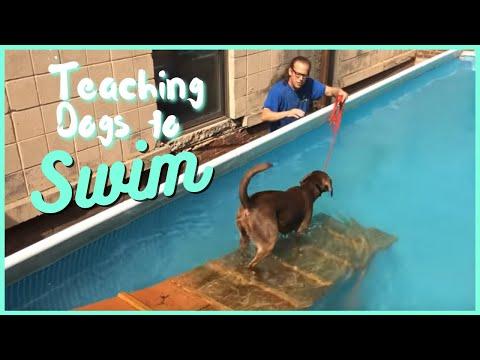 Teaching Dogs to Swim
