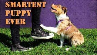 Smartest 10 Week Old Puppy Performs Amazing Dog Tricks