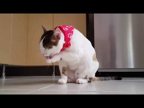 CUTE CATS FUNNY COMPILATION BEST FUNNY ANIMAL CATS VIDEOS