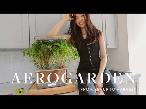 Aerogarden Harvest Set Up + Review | Gourmet Herbs in 1 Month!