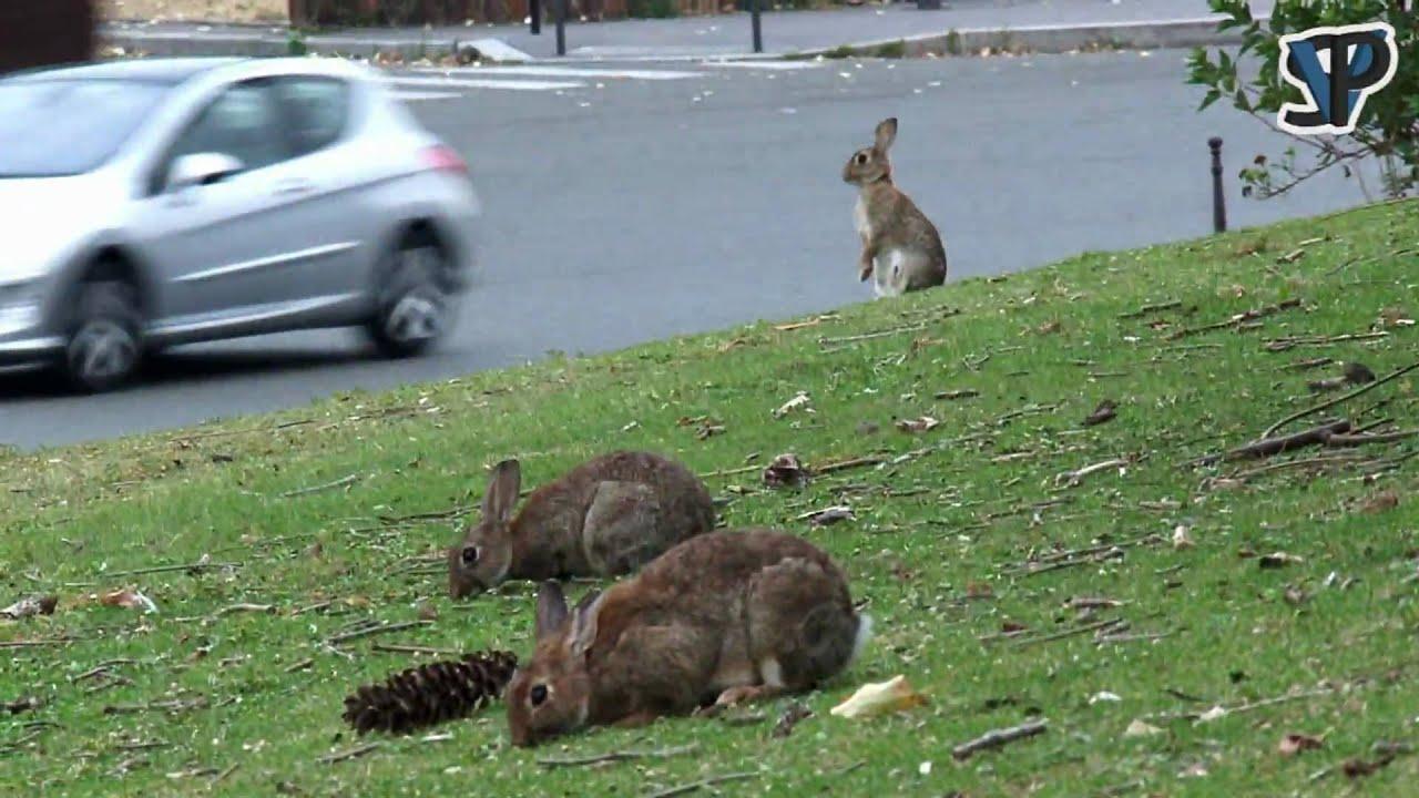 Les lapins de la porte maillot youtube for Porte maillot