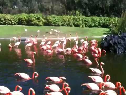 Flamingos at Parrot Jungle Island