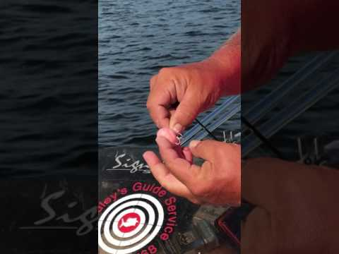 How To Bait A Hook Using Catfish Bubblegum, By Bradley's Guide Service