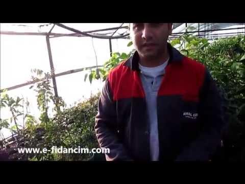 Salatalık Tohumu Ekimi Nasıl Ve Ne Zaman Yapılır Çimlenme Süresi Satışı