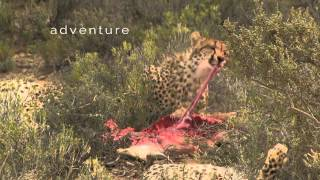 Our new Promo Video!  Sanbona Wildlife Reserve, near Cape Town, South Africa.