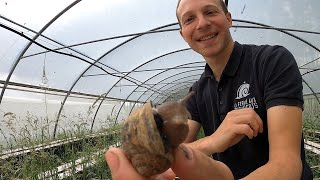 Escargots  Eating French Food at a Snail Farm