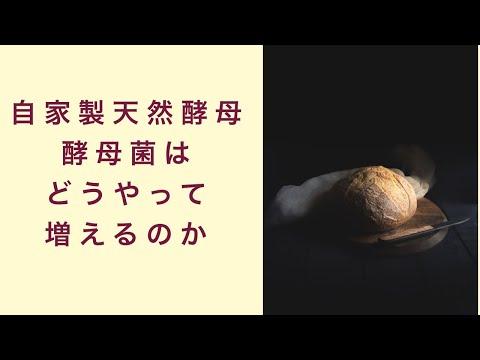 【自家製天然酵母】酵母菌はどうやって増えるの? フルーツ酵母 自家製天然酵母 パン教室 教室開業 大阪 奈良 東京 福岡 名古屋