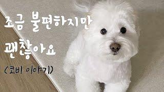 코비의 특별한 이야기, 시력을 잃은 강아지 산책, 강아…