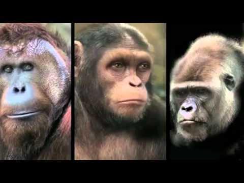 Планета обезьян Революция 2014 КиноПоиск
