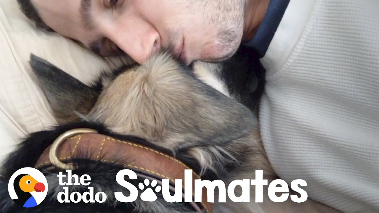 Scared Rescue Dog Slowly Falls In Love With Her New Dad | The Dodo Soulmates