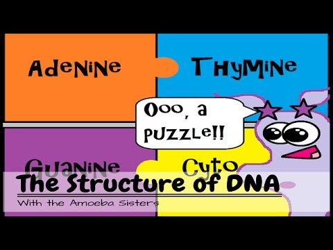 Old Video Dna Structure And Function Youtube