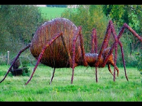 14 World's Largest Spiders - YouTube