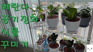 공기정화식물 플랜테리어(베란다) 꾸미기3