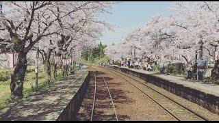 桜満開の「のと鉄道」2016/4.