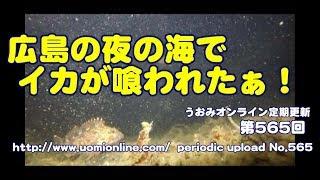 広島は小魚天国でした【水中動画の定期更新No.565】