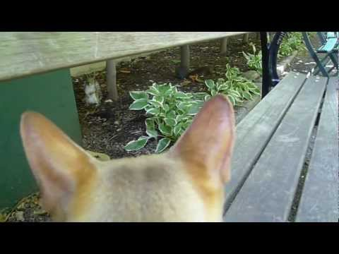 """Felix says: """"Squirrels to the nuts!"""""""