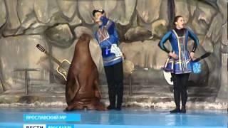 Артисты цирка морских животных побывали в Ярославском дельфинарии(, 2015-02-17T17:41:36.000Z)