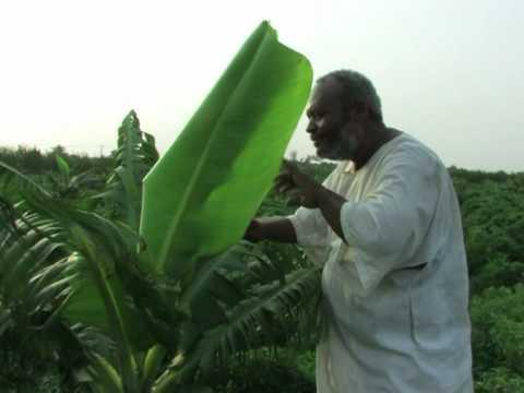 Arabic-Web-Sudan struggles to develop farming