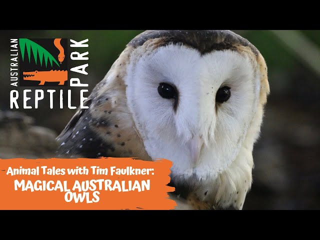 ANIMAL TALES WITH TIM FAULKNER | EPISODE 31 | MAGICAL AUSTRALIAN OWLS 🌟