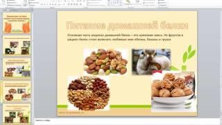 презентация белок 2